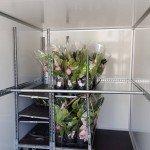Proline bloemenwagen 407x181x200cm bloemenwagens Aanhangwagens XXL West Brabant vracht met steun Aanhangwagens XXL West Brabant